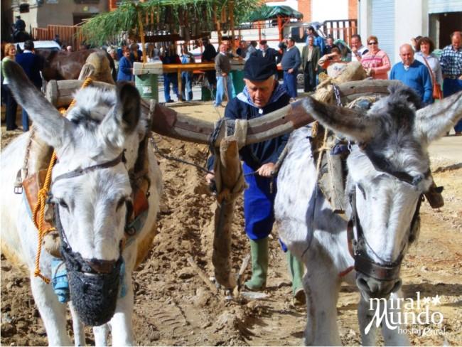 Otoño en la Sierra del Segura feria de tradiciones de yeste
