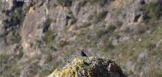 Ecoturismo con ACTIO birding en Aýna