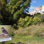 Visita guiada para conocer la Flora y fauna en Aýna