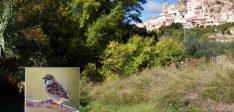 Visita guiada para conocer de Flora y Fauna de Aýna