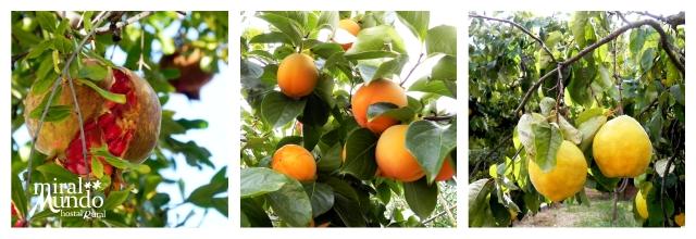 los frutos del otoño - Granadas, Caquis, Membrilos