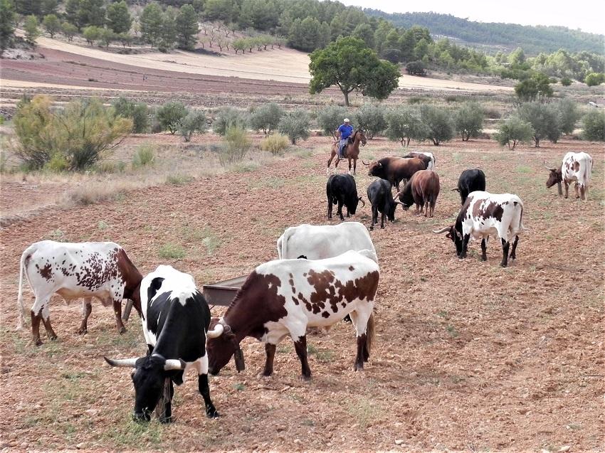 Encierros en Albacete 2017