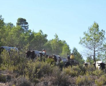 Encierros en Albacete 2018