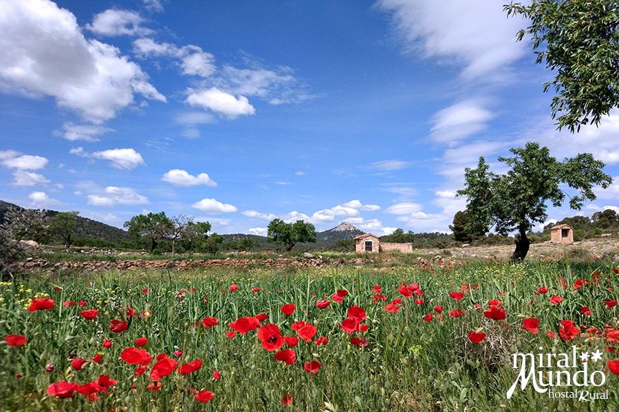 Aýna-paisajes-primavera-Sierra-del-Segura-Albacete-Miralmundo