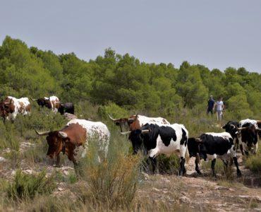 Encierros en Albacete 2019
